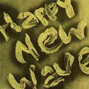 Xao Seffcheque - Happy New Wave mp3 download